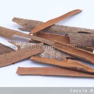 Cassia Broken 1