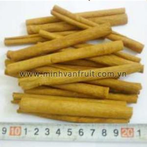 Cassia Vera 10-12cm 1