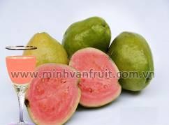 Pink Guava Puree 1