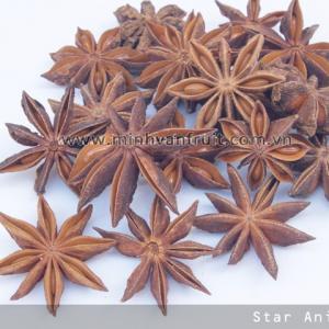 Star Aniseed 1